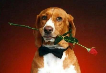 Cão cavalheiro